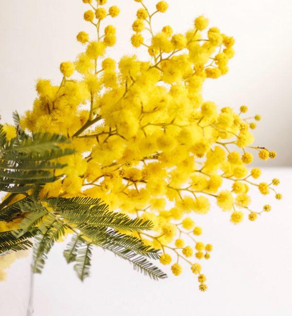web_mimosa2
